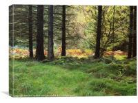 Golden Ferns sunlit through trees, Canvas Print