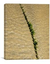 Seaweed covered chain divides ripples on beach, Canvas Print