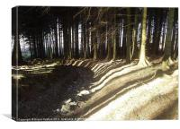 Striped shadows over woodland track, Canvas Print