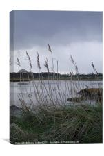 River marshes, Canvas Print