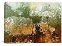 Textures of a living wall, Canvas Print