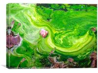 Dale Peninsular swirling seaweed, Canvas Print