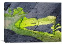 Musslewick coastal path rock steps, Canvas Print
