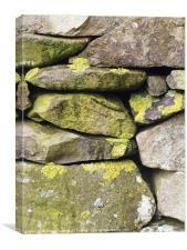 Dry stone wall, Cumbria, with lichen, Canvas Print