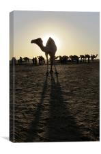 Lone camel silhouette, long shadows, Canvas Print