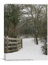 Walk in Cranfield Woods, Bedfordshire, Canvas Print