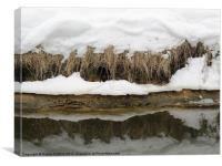 Fens in snow, Canvas Print