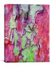 PINK & green tree bark, Canvas Print