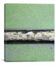 Tree trunk floating in pondweed, Canvas Print