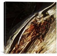 Bark of fallen tree, Canvas Print