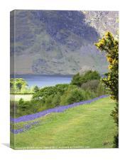 Bluebells, Rannerdale Cumbria, Canvas Print