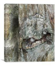 Gnarled tree bark, Canvas Print