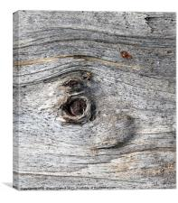 Eye of tree bark, Lilleshall, Canvas Print