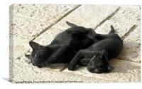 Black kittens tired from tussle, Canvas Print