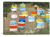 Colourful Greek Honey Hives Beekeeper, Canvas Print