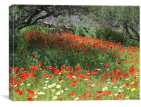 Poppies in Olive Grove, Canvas Print