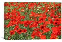 Poppies, poppies so red!, Canvas Print