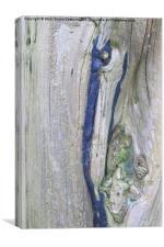 Tree Bark Ashdown Park Hotel , Canvas Print