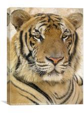 MAJESTIC TIGER, Canvas Print