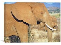 AFRICAN ELEPHANT ON THE MASAI MARA, Canvas Print