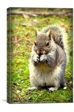 Pretty please can I have a nut, Canvas Print