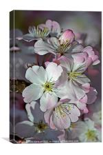 Pink Spring Blossom, Canvas Print