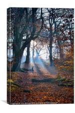 Chevin Forest Park #2, Canvas Print