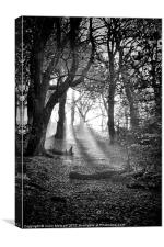 Chevin Forest Park #2 Mono, Canvas Print