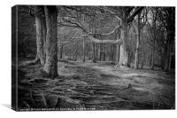 Chevin Forest Park #3 Mono, Canvas Print