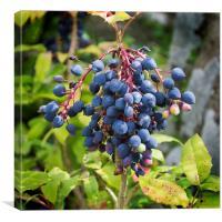 Blackthorn Berries, Canvas Print