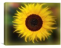 Sunflower Bizarrius Photoshopii, Canvas Print