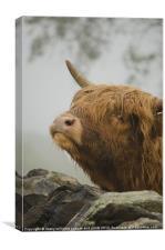 Highland Beast, Canvas Print