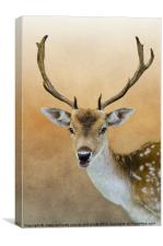 Fallow Deer Stag, Canvas Print
