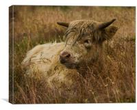 Camouflaged Cow, Canvas Print