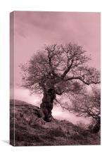 Oak On A Slope, Canvas Print
