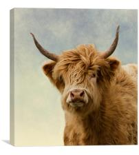 Hairy Highlander, Canvas Print