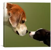 Nose To Nose Dogs 2, Canvas Print