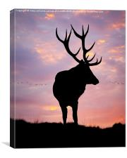 Stag And Sunset , Canvas Print