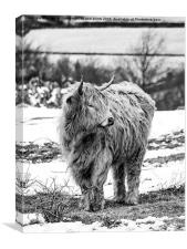Highland Cow In Black And White, Canvas Print