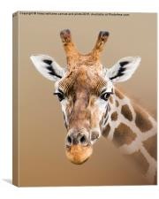 Beautiful Giraffe , Canvas Print