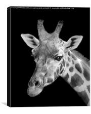 Giraffe In Black And White , Canvas Print