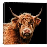 Highland Cow 2, Canvas Print