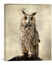 Birds Of Prey. Long Eared Owl, Canvas Print
