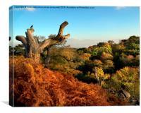 Landscape, Autumn Oaks, Canvas Print