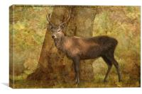 The Stag Party Collection. Autumn Shade, Canvas Print