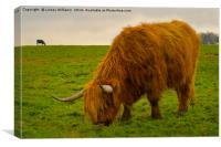 A Hairy Highlander Grazing, Canvas Print