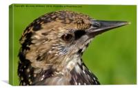 Starling Profile, Canvas Print