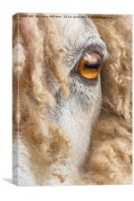 Leicester Longwool Sheep 2, Canvas Print