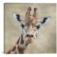 Giraffe Portrait, Canvas Print