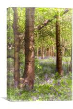 Dreaming of Bluebells in Spring, Canvas Print